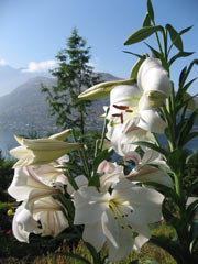 Pencarrow, Luxury Queenstown Bed and Breakfast Accommodation with panoramic lake and mountain views